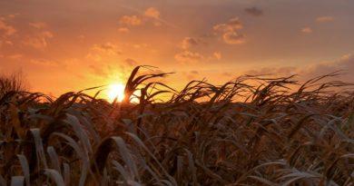 Investir dans la terre agricole en bénéficiant de 25% de réduction d'impôt