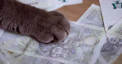 République tchèque : une monnaie numérique pour aider les commerces locaux …
